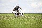 Germany, Lower Bavaria, Man training English Springer Spaniel in grass field