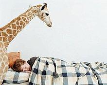 Junge mit Giraffe in seinem Zimmer schlafen