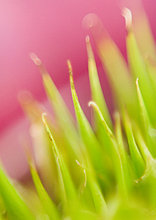 Bromeliad, extreme Nahaufnahme, abstrakt Ansicht