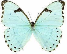 Nahaufnahme eines weißen Schmetterlings