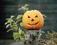 Halloween Kürbis.