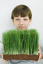 Junge hält Weizen-Gras, Lächeln in die Kamera