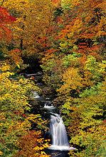 Japan, Wasserfall und Herbstwald