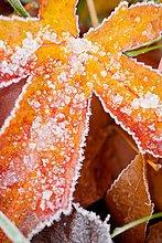 Frost auf Herbstfarben, Oregon, USA