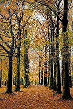 Bäume im Herbst. Brüssel. Belgien