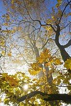 Sonnenlicht ausstrahlend durch Baum, Bayern, Deutschland