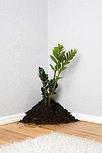 Eine Pflanze von einem Haufen von Schmutz in der Ecke aus einem Wohnzimmer