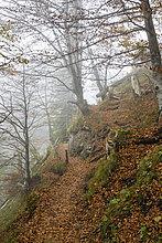 Deutschland, Bayern, Allgäu, Pfad Marien-Brücke in Herbst