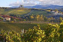 Herbst ,Weinberg ,Chianti