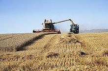 Mähdrescher und Traktor bei der Ernte