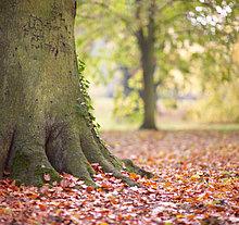Ländliches Motiv,ländliche Motive,Baum,Laub
