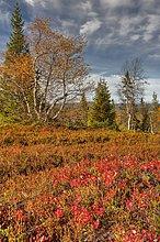 Lappland, Finnland, Pallas Yllastunturi National Park, im Herbst