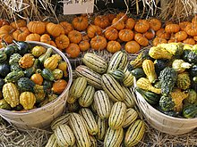 Kürbis Vielfalt an Bauern-Markt