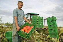 Ökologische Landwirtschaft, Bio, biologische