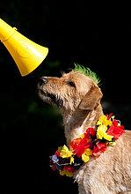 Hund mit Lei und Irokesenschnitt schaut auf Vuvuzela