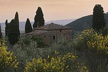 Landhaus inmitten von Zypressen und blühenden Ginsterbüschen nahe Montalcino, Toskana, Italien