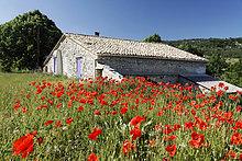 Mohnblumenfeld mit einem alten Sandsteinhaus, Provence, Frankreich, Europa