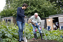 A family working on an allotment together