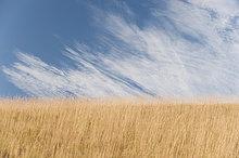 Wolke ,über ,00 Grundlegendes ,Weizenfeld