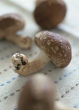 Close-up, close-ups, close up, close ups ,Shiitake ,Tischdecke