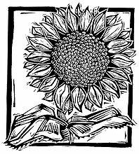 Sonnenblume, helianthus annuus ,Illustration