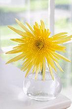 gelb ,Blumenvase ,Spinne