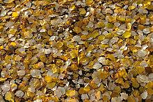 Farbaufnahme,Farbe,Muster,Konzept,gelb,Boden,Fußboden,Fußböden,Herbst,Laub,Schnittmuster