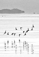 Wasser ,Vogel ,einen Stein hüpfen lassen ,Bucht ,Griechenland ,Peloponnes