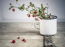 Blumenstrauß,Strauß,Tasse,ungestüm,Erdbeere,Emaille,Deutschland,alt,Holztür,Baden-Württemberg