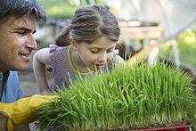 angelehnt,Mann,Frische,über,grün,Bauernhof,Hof,Höfe,Pflanze,riechen,jung,Gewürz,Werkbank,Glashaus,Mädchen
