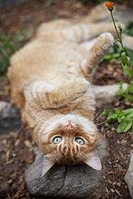 liegend, liegen, liegt, liegendes, liegender, liegende, daliegen ,Garten ,Katze
