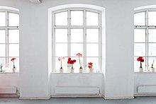 Blume,Amaryllis,Fensterbank