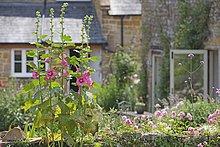 Schönheit,Blume,Wachstum,Garten