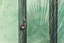 Pflanzenblatt,Pflanzenblätter,Blatt,Schatten,grün,Kanaren,Kanarische Inseln,La Palma,Vorhängeschloß,Spanien,Holztür