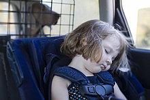 Sitzmöbel ,Auto ,schlafen ,Hund ,Hintergrund ,jung ,Mädchen ,Weimaraner ,Kanada ,Sitzplatz