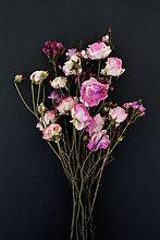 Blume,Bündel,schwarz,Hintergrund,frontal,Verwitterung