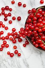 rote Johannisbeere,rote Johannisbeeren,Ribes rubrum,rot,Johannisbeere,Anschnitt,Metall
