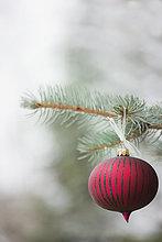 Baum,hängen,Dekoration,Ast,rot