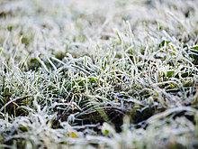 Winter,Gras,gefroren,Deutschland
