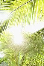 niedrig,Sonnenstrahl,Baum,Ansicht,Flachwinkelansicht,Palme,Farn,Winkel