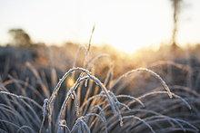bedecken,Pflanze,Sonnenlicht,Frost