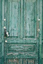 grün,weiß,Dekoration,blühen,alt,Holztür