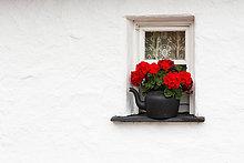 Fenster,Wand,Fenstersims,Blume,waschen,klein,weiß,schwarz,Close-up,rot,Clare County,Irland,Wasserkocher