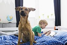 sitzend,benutzen,Junge - Person,Bett,Hund,Tablet PC