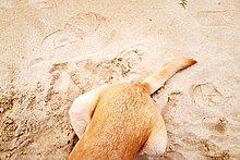 verstecken,Hund,bizarr,Sand,Stück