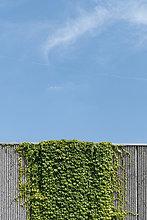Wand,Himmel,Wachstum,Pflanze,frontal,blau,Beton,kriechen,robben