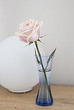 Blumenvase,1,Rose