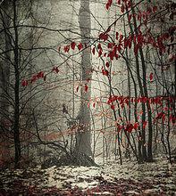 Winter,Wald
