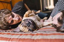 liegend,liegen,liegt,liegendes,liegender,liegende,daliegen,Interior,zu Hause,französisch,Bett,jung,Bulldogge,spielen