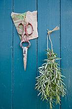Holzwand,Schere,Bündel,hängen,Rosmarin